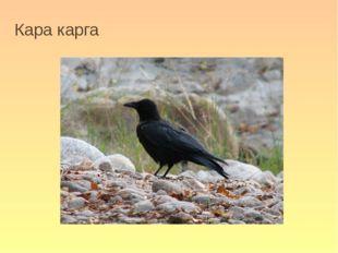 Кара карга