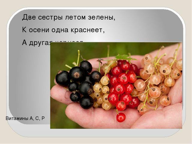 Две сестры летом зелены, К осени одна краснеет, А другая чернеет. Витамин...
