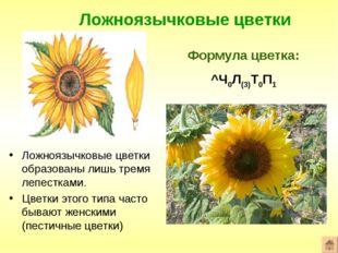 Ложноязычковые цветки Формула цветка: ^Ч0Л(3)Т0П1 Ложноязычковые цветки образ