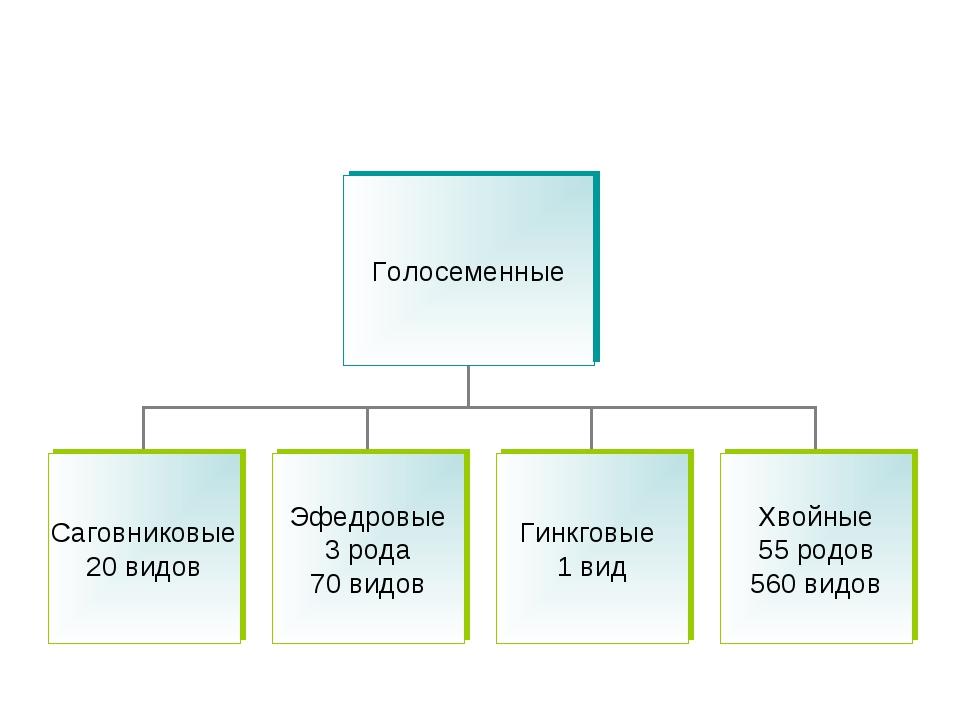 Систематика голосеменных растений