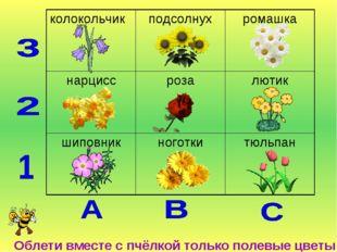 Облети вместе с пчёлкой только полевые цветы колокольчикподсолнухромашка н