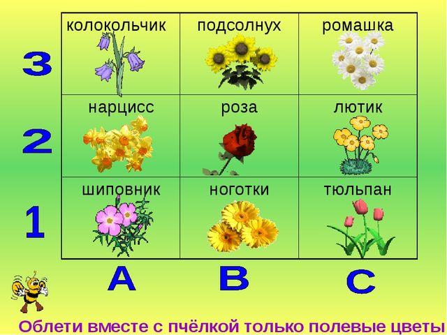 Облети вместе с пчёлкой только полевые цветы колокольчикподсолнухромашка н...