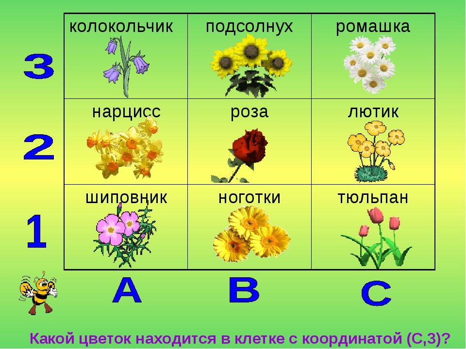Какой цветок находится в клетке с координатой (С,3)? колокольчикподсолнухр...