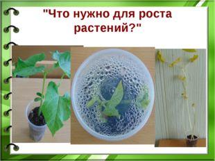"""""""Что нужно для роста растений?"""""""