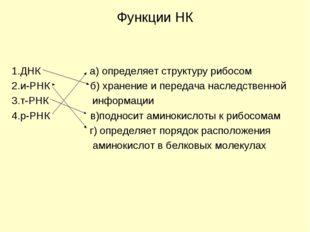Функции НК 1.ДНК а) определяет структуру рибосом 2.и-РНК б) хранение и переда