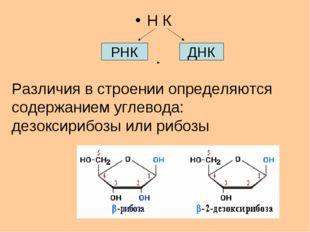 Н К РНК ДНК Различия в строении определяются содержанием углевода: дезоксириб