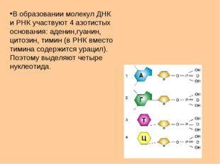 В образовании молекул ДНК и РНК участвуют 4 азотистых основания: аденин,гуани