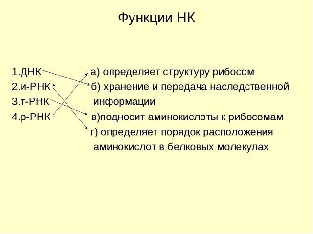Функции НК 1.ДНК а) определяет структуру рибосом 2.и-РНК б) хранение и переда...