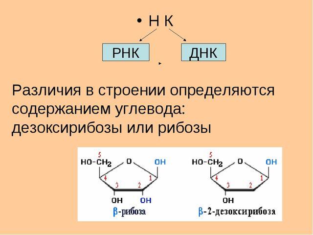 Н К РНК ДНК Различия в строении определяются содержанием углевода: дезоксириб...