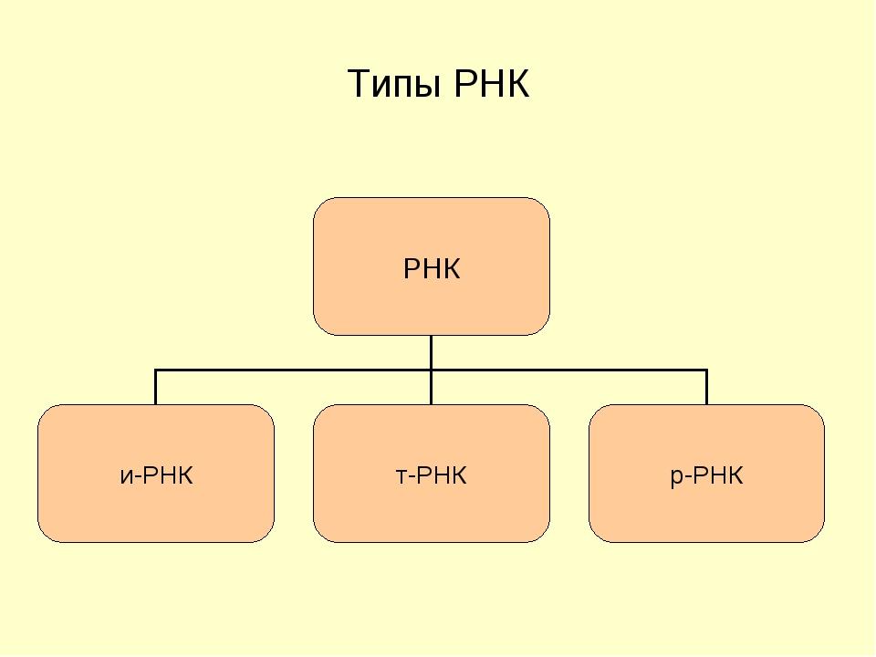Типы РНК