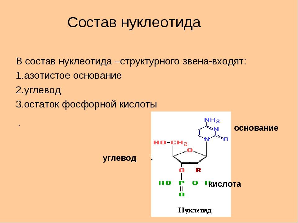 В состав нуклеотида –структурного звена-входят: 1.азотистое основание 2.углев...