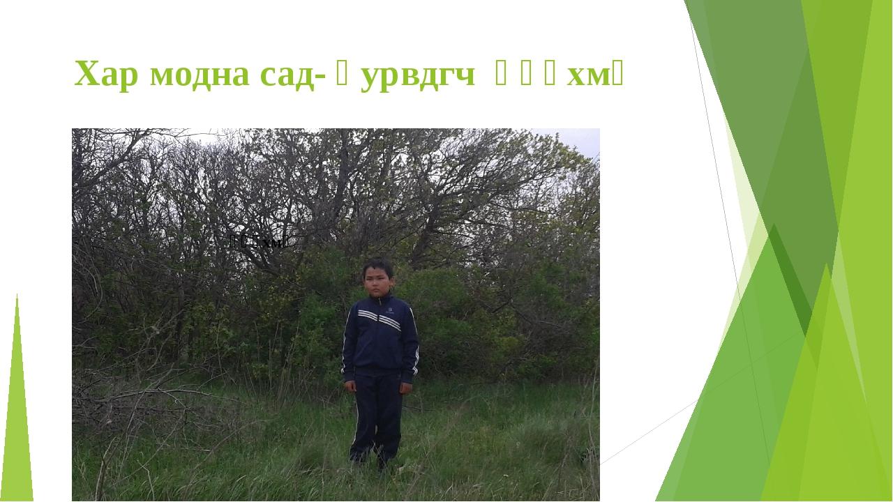 Хар модна сад- һурвдгч һəəхмҗ һəəхмҗ