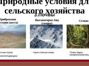 Главные отрасли сельского хозяйства Основные сельскохозяйственные культуры пр