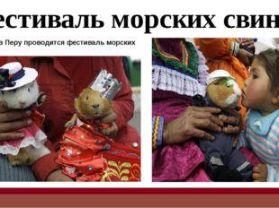 После парада платьев, маленьких грызунов всячески балуют и кормят вкусной едой.