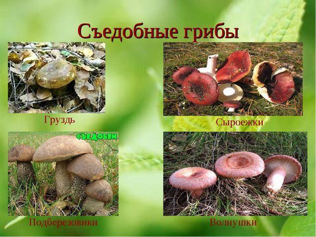 Съедобные грибы Груздь Сыроежки Подберезовики Волнушки