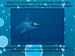 Водится в тропических и субтропических водах, единично встречается в Черном и