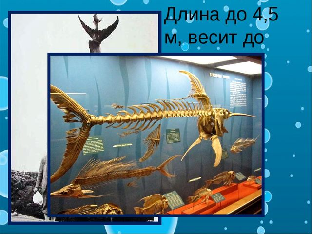 Длина до 4,5 м, весит до 700кг.
