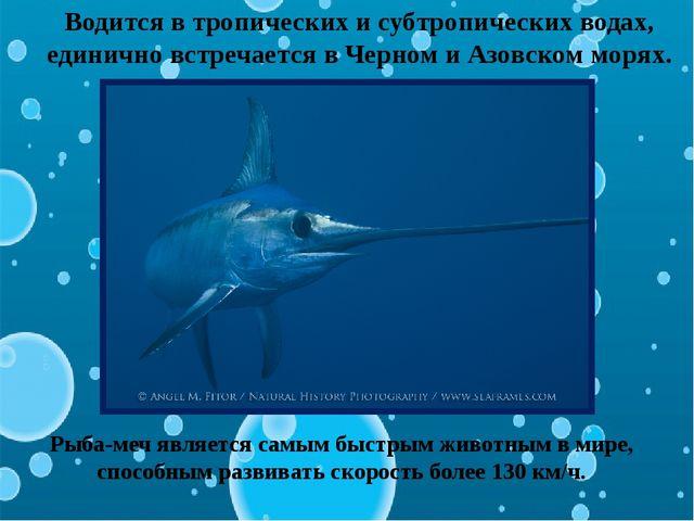 Водится в тропических и субтропических водах, единично встречается в Черном и...