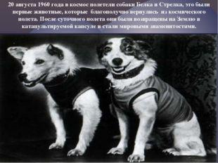 20 августа 1960 года в космос полетели собаки Белка и Стрелка, это были первы