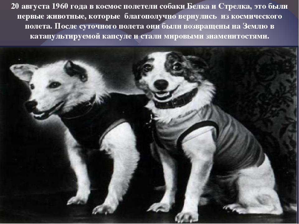 20 августа 1960 года в космос полетели собаки Белка и Стрелка, это были первы...