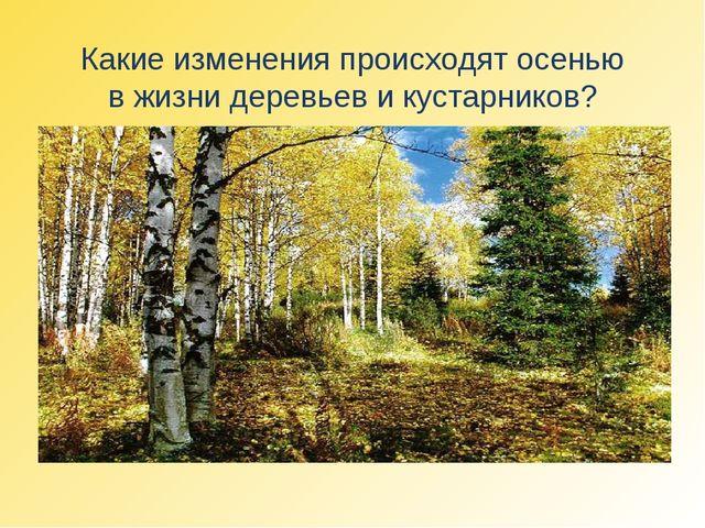 Какие изменения происходят осенью в жизни деревьев и кустарников?