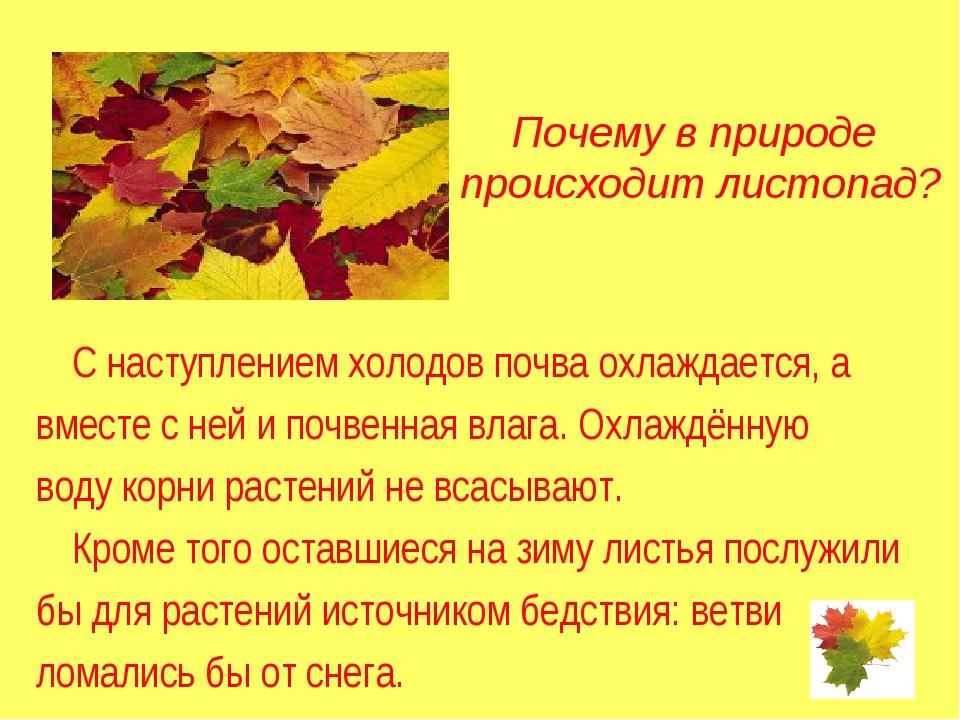Почему в природе происходит листопад? С наступлением холодов почва охлаждает...