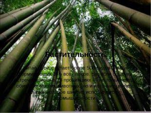 Растительность В Китае произрастает более 500 видовбамбука, формирующих 3%