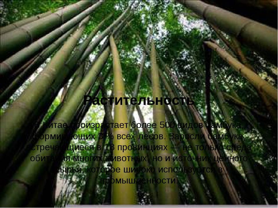 Растительность В Китае произрастает более 500 видовбамбука, формирующих 3%...