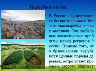 Вырубка лесов В России осуществляется бесконтрольная и беззаконная вырубка ле