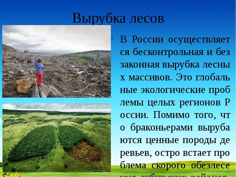 Вырубка лесов В России осуществляется бесконтрольная и беззаконная вырубка ле...