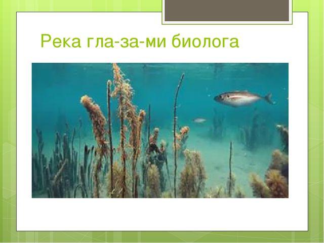 Река глазами биолога