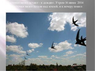 «Ласточки низко летают - к дождю». Утром 16 июня 2014 года ласточки низко лет