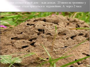 Муравьи спешат в свой дом – жди дождя. 23 июня на тропинке у дома муравьи ста
