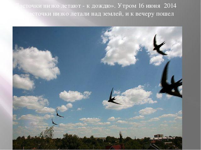 «Ласточки низко летают - к дождю». Утром 16 июня 2014 года ласточки низко лет...