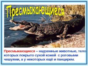 Пресмыкающиеся – надземные животные, тело которых покрыто сухой кожей с рогов