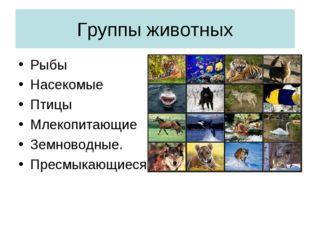 Группы животных Рыбы Насекомые Птицы Млекопитающие Земноводные. Пресмыкающиеся