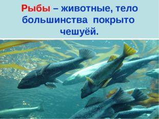Рыбы – животные, тело большинства покрыто чешуёй.