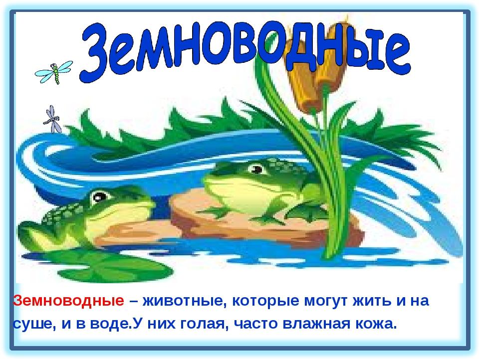 Земноводные – животные, которые могут жить и на суше, и в воде.У них голая, ч...