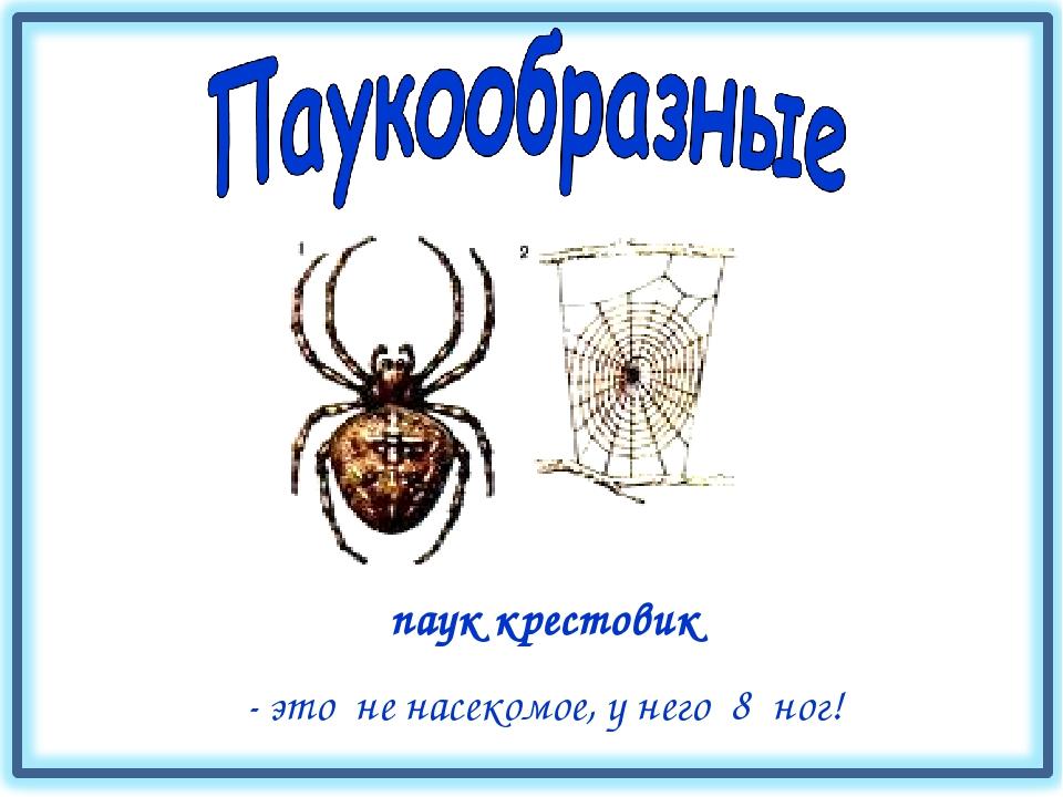 паук крестовик - это не насекомое, у него 8 ног!