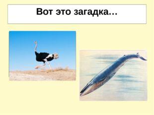 Вот это загадка… И петь не поёт, и летать не летает… За что же народ его птиц