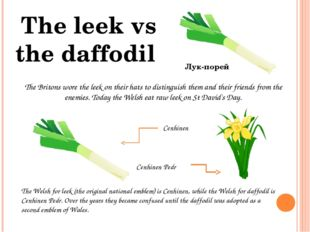 The Britons wore the leek on their hats to distinguish them and their friends