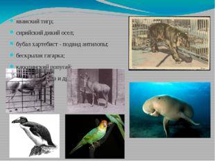 яванский тигр; сирийский дикий осел; бубал хартебист - подвид антилопы; бескр