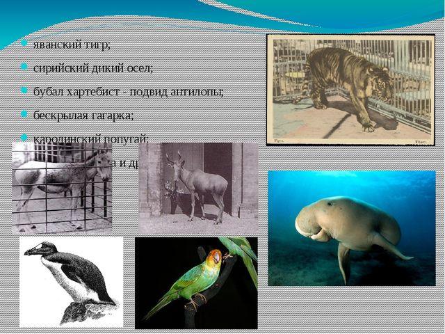яванский тигр; сирийский дикий осел; бубал хартебист - подвид антилопы; бескр...