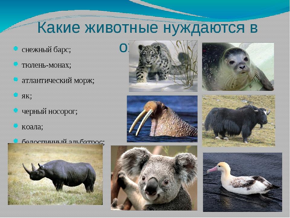 Какие животные нуждаются в охране: снежный барс; тюлень-монах; атлантический...
