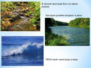 В лесной прохладе бьет из земли родник. Быстрые ручейки впадают в реки. РЕКА