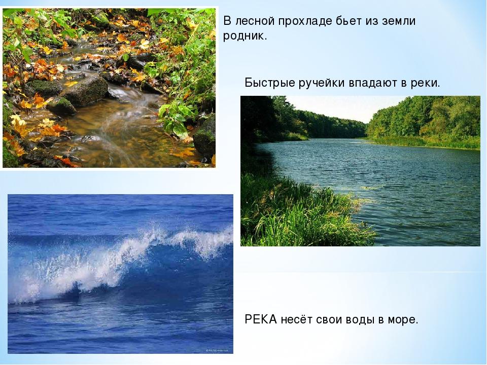 В лесной прохладе бьет из земли родник. Быстрые ручейки впадают в реки. РЕКА...