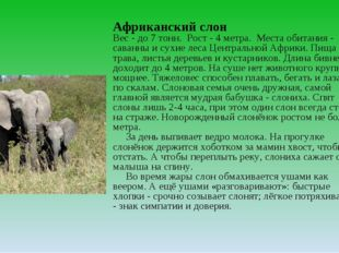 Африканский слон Вес - до 7 тонн. Рост - 4 метра. Места обитания - саванны и