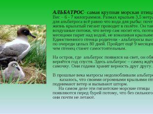 АЛЬБАТРОС- самая крупная морская птица Вес – 6 - 7 килограммов. Размах крылье
