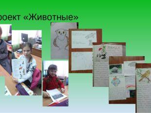 Проект «Животные»