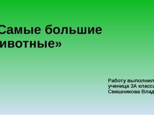 «Самые большие животные» Работу выполнила ученица 3А класса Свешникова Влада